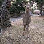 イギリスのEU離脱と奈良の鹿