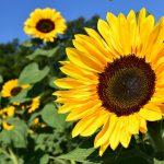 2017年8月の「ブログ夏期休暇」を何日取ろうかなと考え中