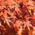 嵐山(京都)の紅葉狩りを中止とした2つの理由
