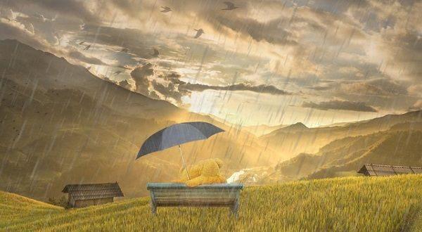 teddy & rain