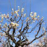 新元号「令和」の出典は梅を見ながら飲んでる場面