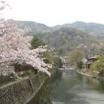 twitterの桜開花情報をもとに嵐山行きを中止